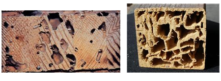 Termites damage Newcastle