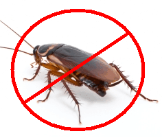 How To Eliminate Cockroaches completely