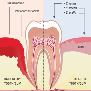 Dietary guide for weight loss and teeth care routine