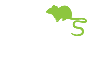 Prevent Firewood Bugs In Your Home This Winter