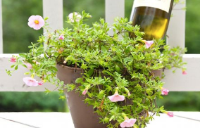 Terrarium: A Jar with Full of Joy