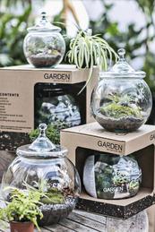 The 5 Best Plants To Grow In Your Terrarium